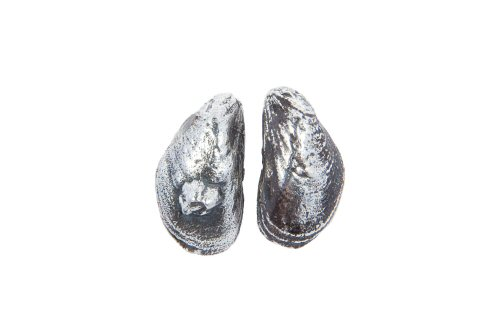 Mussel Shell Stud Earrings.